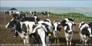 Hayvancılık Devlet Desteği ve Hayvancılık Hibeleri Nelerdir